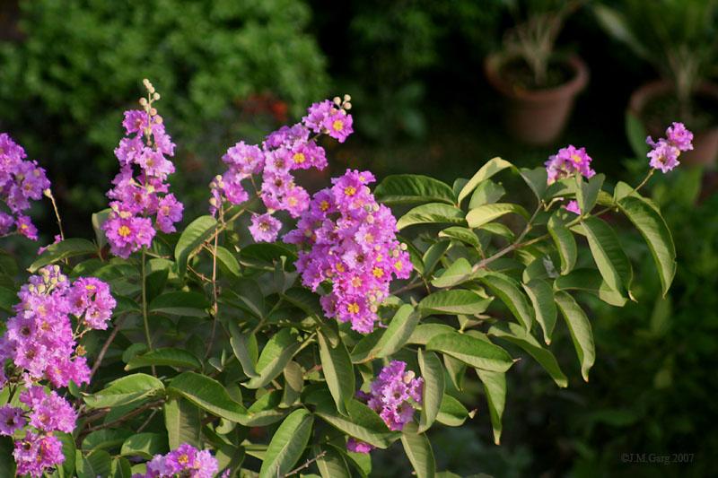 Flowers_&_leaves_I_IMG_1864